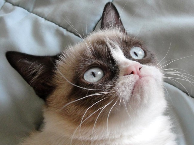 Grumpy-Cat from Flickr via Wylio