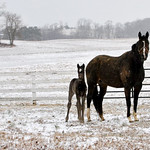 2013 Forest Nightlife colt