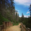 Trails at Rio Terrace #yeg #run