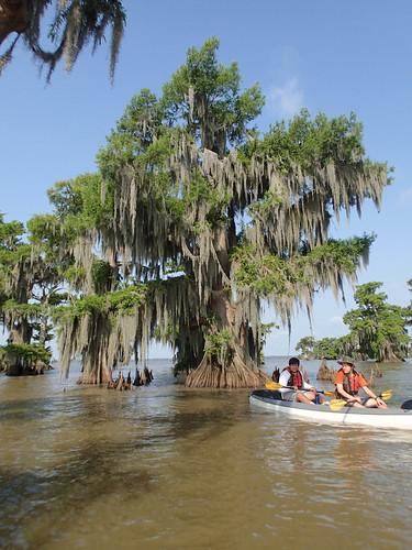 kayak cypress