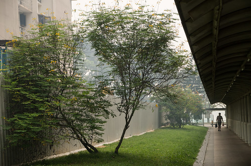 A lone figure walking under a rain shelter - this will not be enough to hide from the haze.