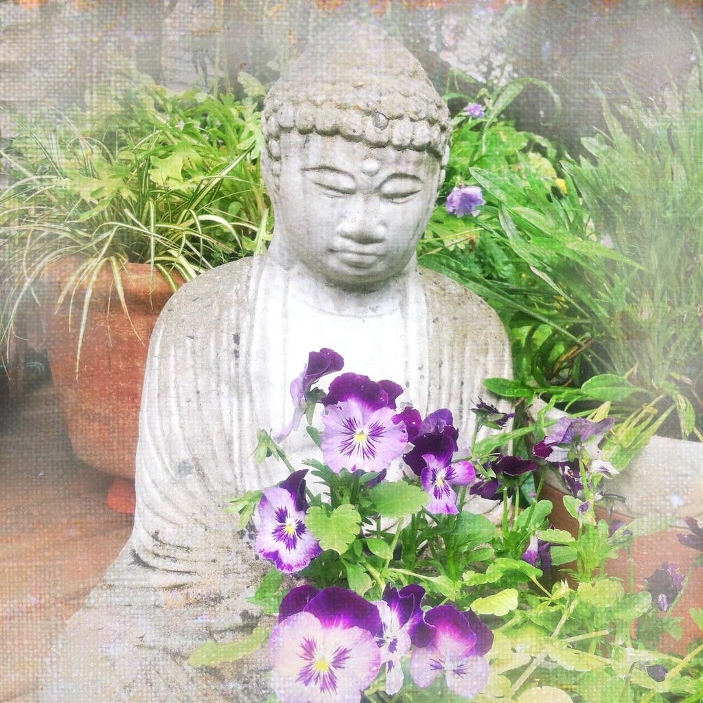 Brenda's garden serie