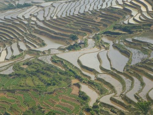 Yunnan13-Yuanyang 16-Qingkou (11)