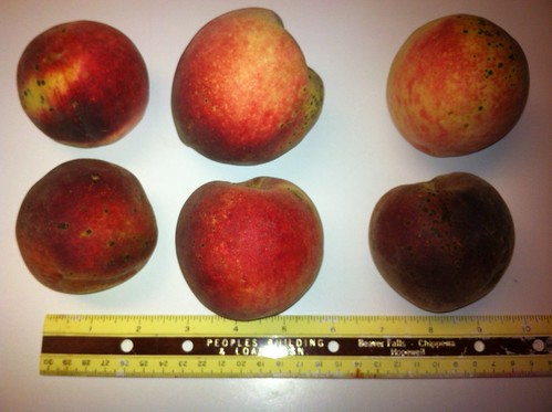 unknown white peach