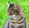 cat looking left • outdoor • in the Meadows •