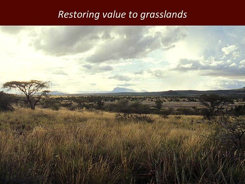 Restoring value to grasslands