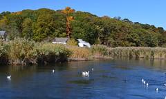 Nissequogue River