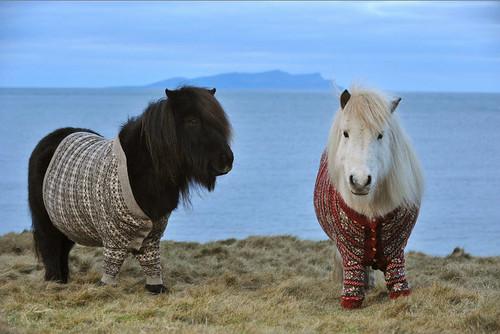 shetland-ponies-cardigans