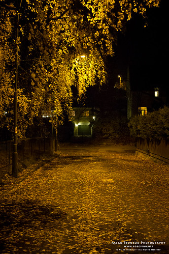 Yellow leaves and streetlight | by The Autodidact Photographer