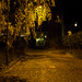 Yellow leaves and streetlight