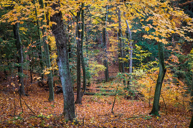 Autumn, Fall, Leaves, Forest, Colorful,