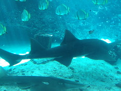 Sharks in the Townsville Aquarium.