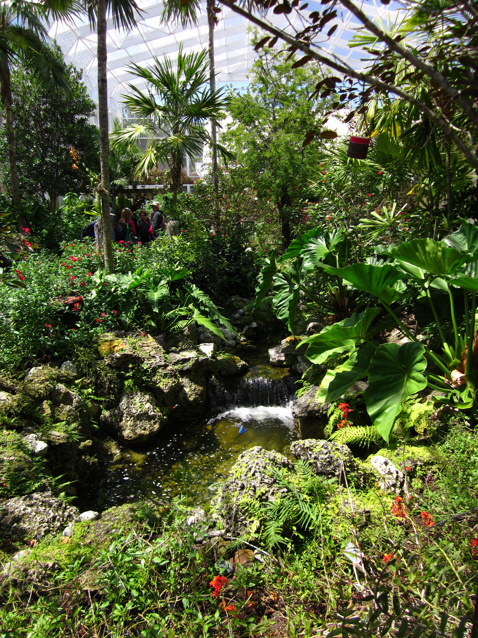 Amanda plante 39 s garden guide baby it 39 s hot outside at - Fairchild tropical botanic garden ...