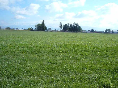Grass field in Whatcom County where study was conducted