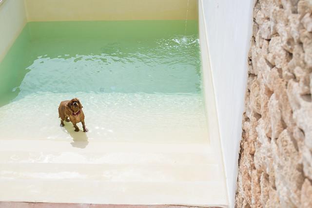 Ibiza living: Mauricio & Bradley, Coco Safari 146