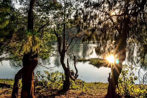 trees sunset sun india reflection beautiful landscape sony sunburst ooty glenmorgan mirrorless nex3n sonynex3n