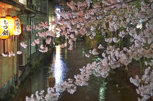 【写真】2014 桜 : 木屋町通/2021-09-17/IMGP5598