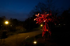 Red tree in the night