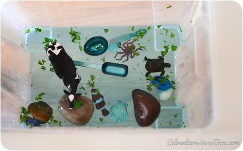 aquarium-29