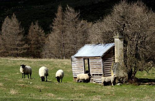 Shepherd's shelter.