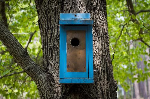 blue bird house.