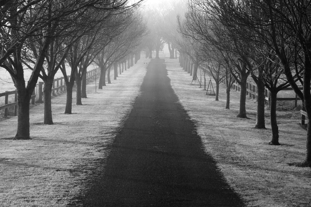 Vanishing Driveway