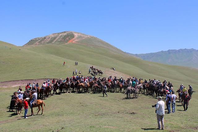 crowd of horses