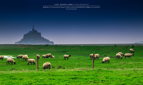 france saint canon landscape sheep country frança normandie michel tamron normandy mont 18200 sheeps normandia 70d