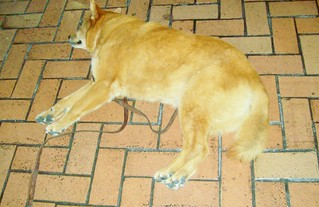 Sleeping dog - Bart Station