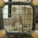 cemetery cat by Instagram:rangefinderx