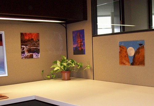 desert guy photos in my cubicle