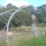 Putting up the first polytunnel