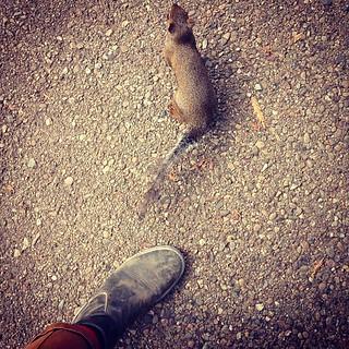 Dumb humanized SF squirrels are making me miss Calgary. #calgarysblacksquirrelproblems
