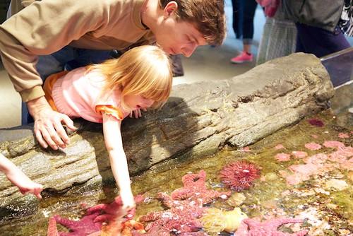 Baby Touching Sea Anemone