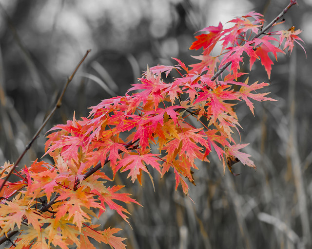 Autumn color slash 01
