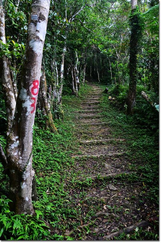 帽子山登山步道 7