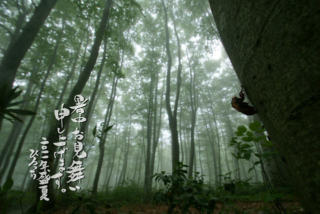 写真_蝉霧雨