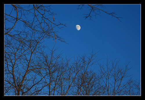 Leafless moonrise