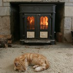 Cat in front of the fire