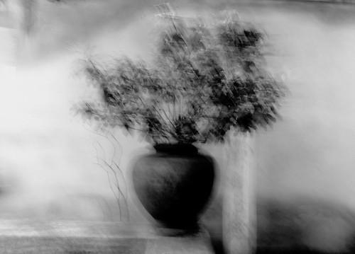 vaso  di  fiori  !!! by gpaolini50