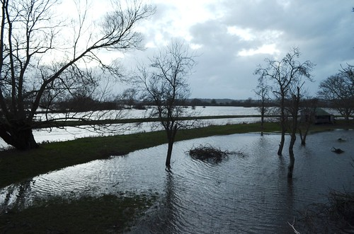 Muchelney, Somerset Levels