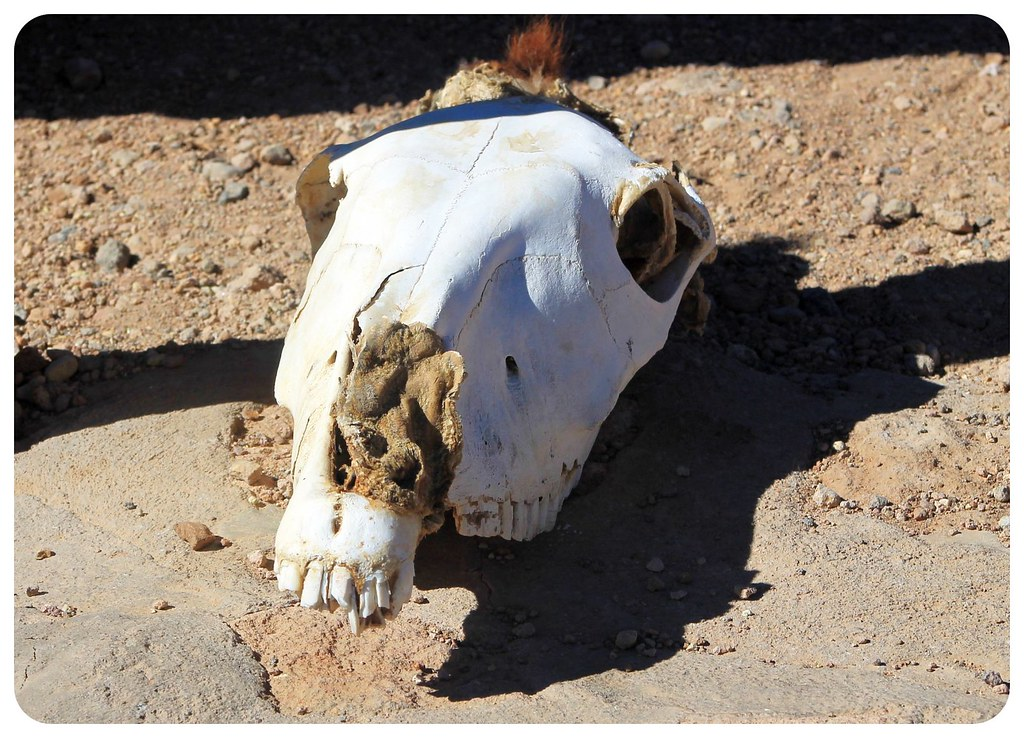 atacama desert chile skull