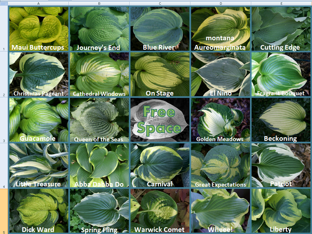 2014 Hosta Bingo - Key
