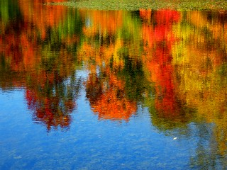 Colorful Tree Reflection
