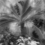 Obrázek Belle Isle Conservatory u Windsor. detroit conservatory belleisle annascrippswhitcomb annascrippswhitcombconservatory