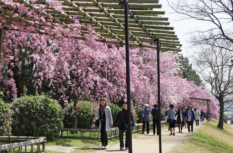 Kyoto Botanical Gardens along Kamogawa