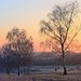 Frosty morning on the Common by Andrew Boxall