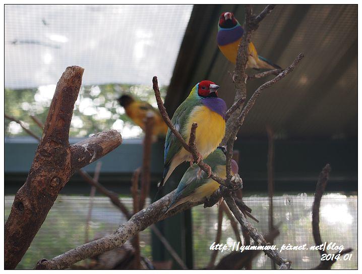 森林鳥花園55