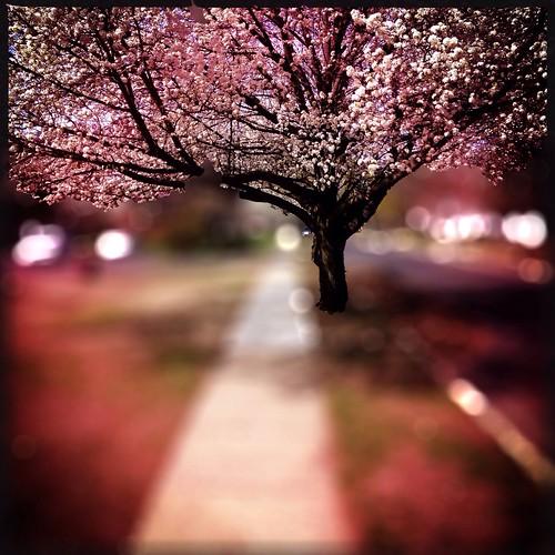 Happy Spring! Pantone Colors By GIZMON Mob Fiction NEM Landscape NEM GoodKarma at Woodbury Heights, NJ
