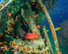 Coral Grouper at Seaventures rig